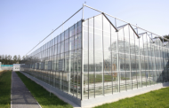 LEADING GREENHOUSE EXPORTER FROM CHINA