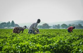 Committed to Zimbabwe's farming sector