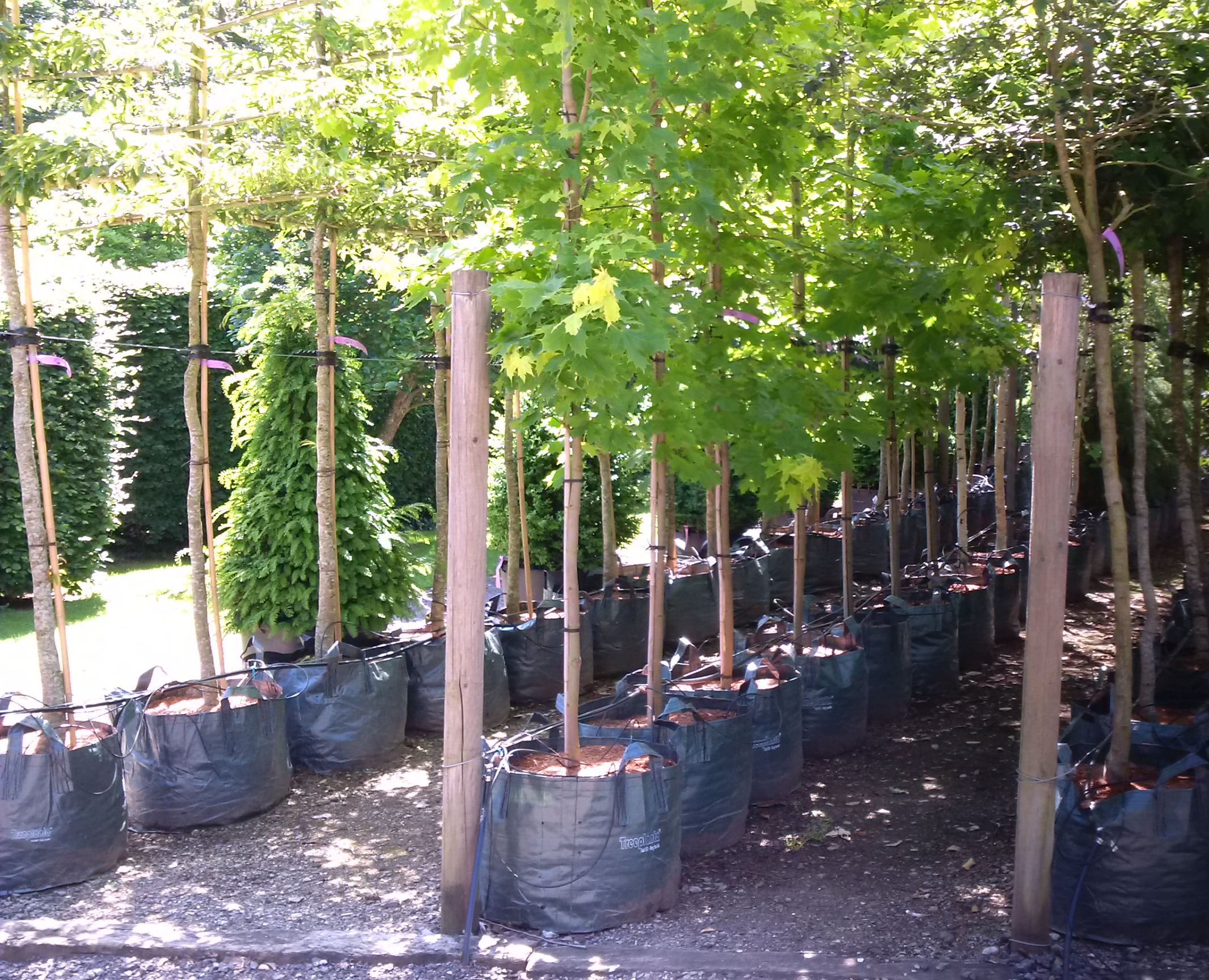Beck Group's specialist range of planter bags to meet today's demand for large landscape projects.