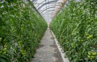 The Farmhouse launches UAE-grown pesticide-free produce
