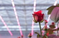 Philips Lighting unveils new Philips GreenPower LED toplighting light recipe for European market at Rose Event