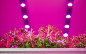 Philips Lighting collaborates with Travaglini FarmTech and Planet Farms on first vertical farm research lab in Italy