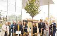 IPM Partner Country Belgium Gives Messe Essen a Tilia platyphyllos 'Zelzate' as a Gift