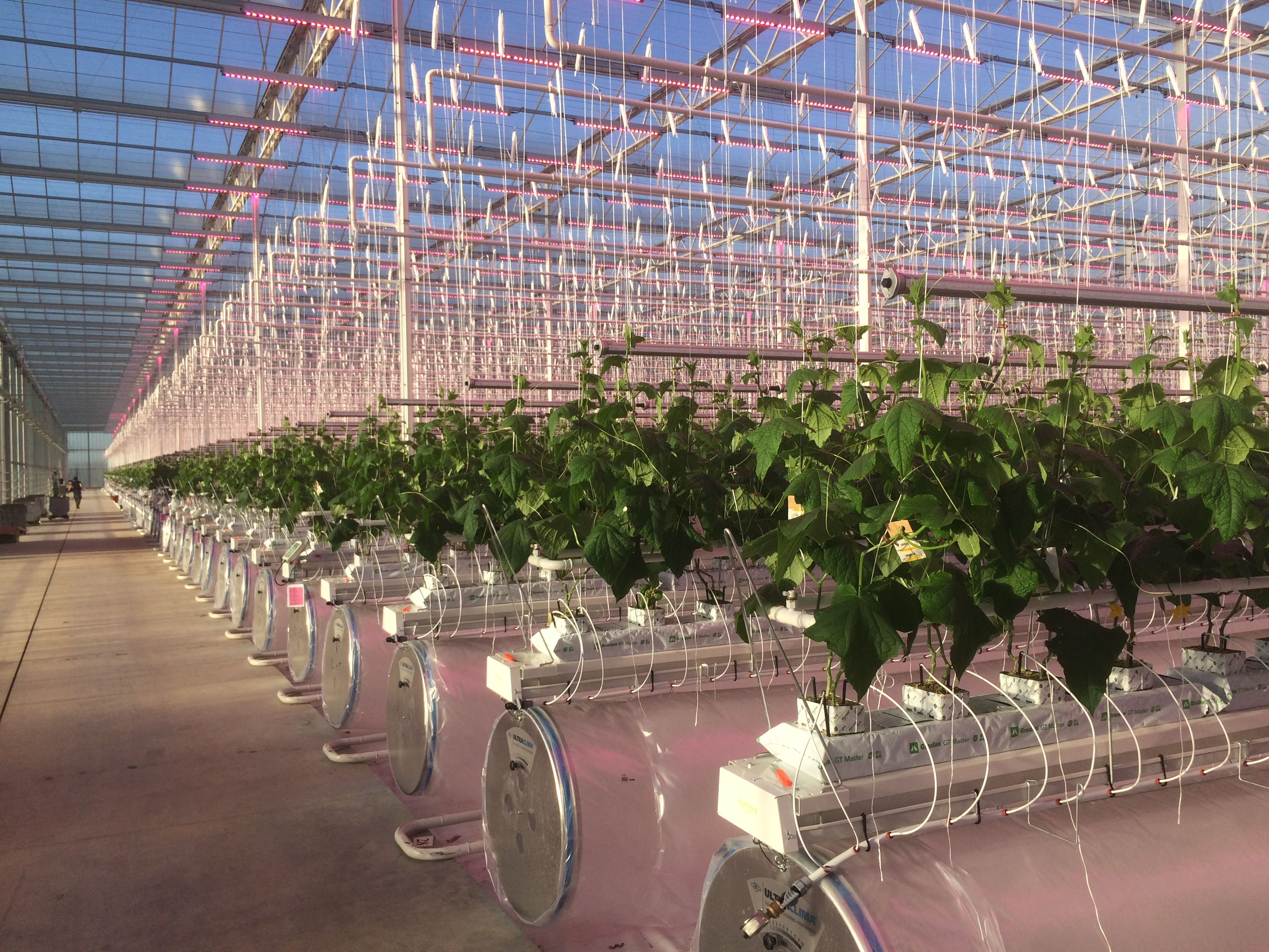 Jardins Réunis and Cheminant first in France to grow cucumbers year-round with full Philips GreenPower LED lighting installations