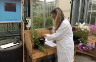 Levity CropScience's research shows its products have flower power