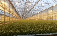 Macfrut, horticulture innovation in the spotlight