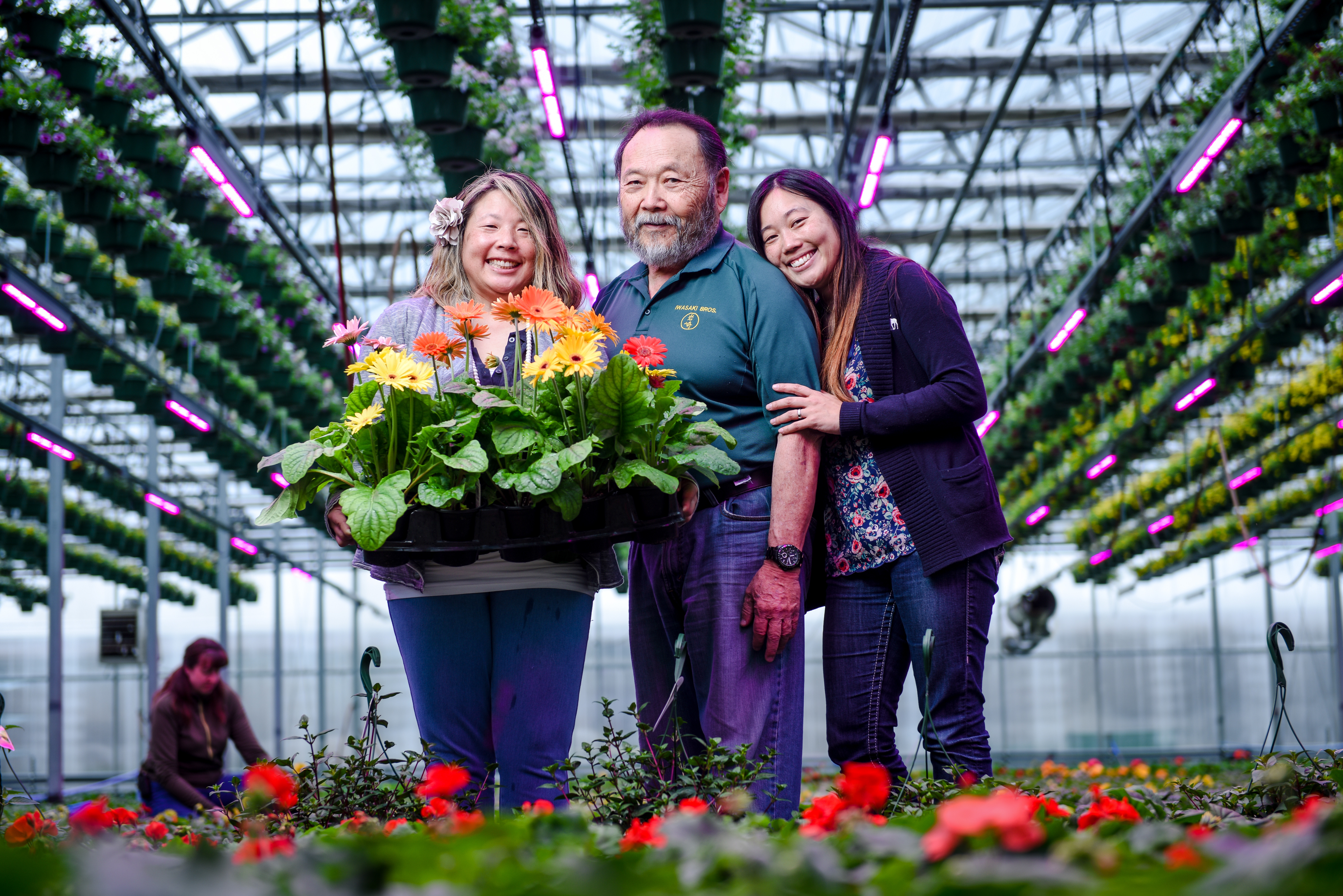 Signify to deliver horticulture LEDs faster to customers in North America to address fast-growing demand