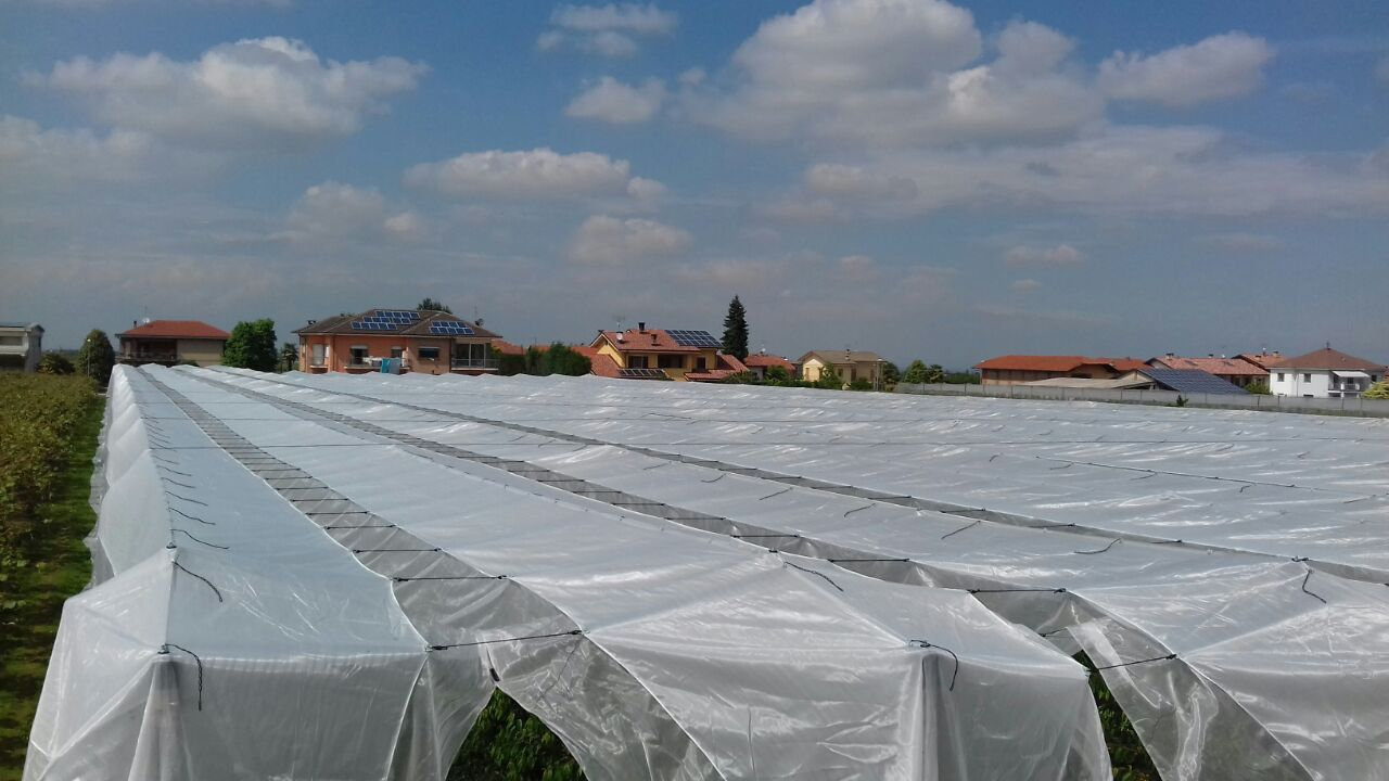 ARRIGONI GREEN SOLUTION AGAINST EXCESSIVE RAINFALLS AND INSECTS IN CHERRY GROWING