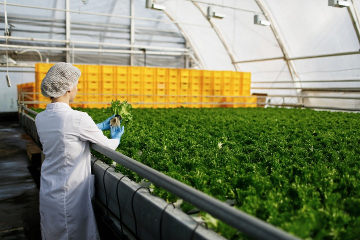 How agri-tech can help Singapore and the UAE boost domestic food production