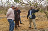 Levity CropScience registers three more products in Egypt