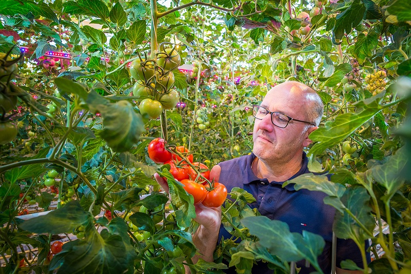 Signify expands in Belgian horticulture market with new TOMCO project