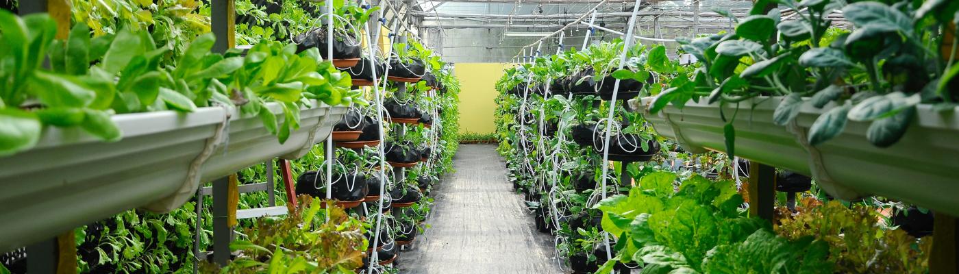 GreenTech 2019 addresses crop production challenges