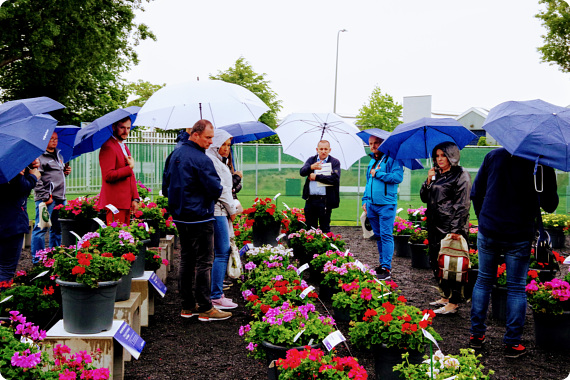 FlowerTrials®: Even the rain could not dampen the spirits! Visitors show a preference for cluster locations