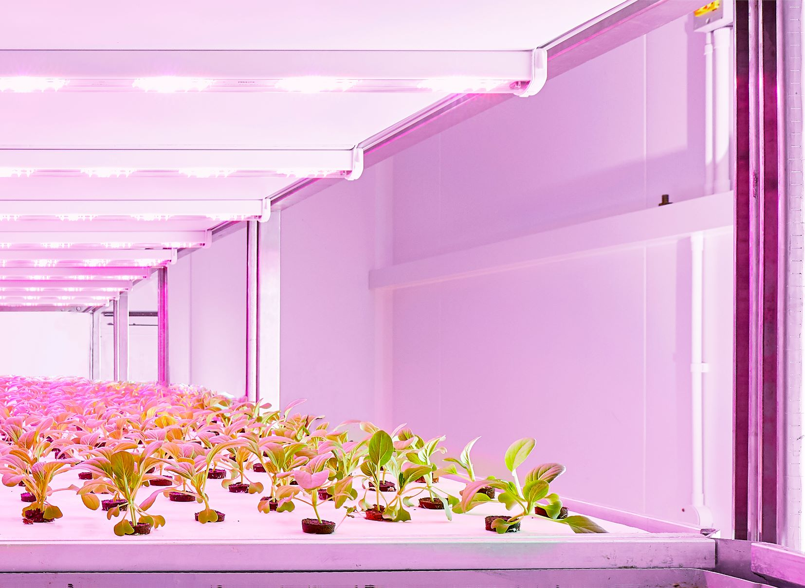 Signify optimizes multilayer crop cultivation by introducing Philips GreenPower LED production module 3.0