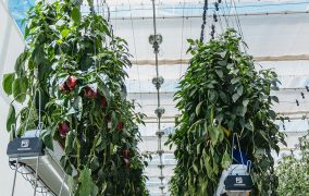 Novagric offers high-tech solutions for greenhouse growing at the global market