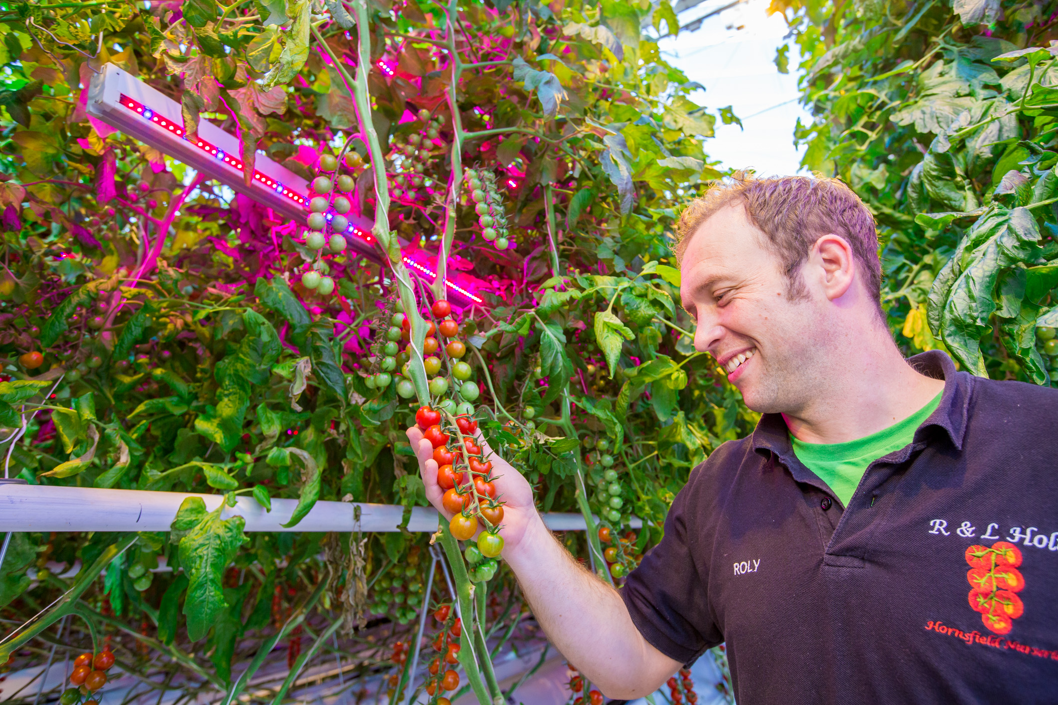 Evesham Vale Growers and R & L Holt increase marketable yield by 25% using Signify's hybrid lighting system