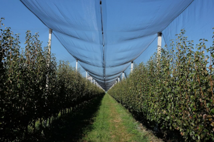 APPLE AND PEAR: SAFE PRODUCTION THANKS TO ARRIGONI SCREENS