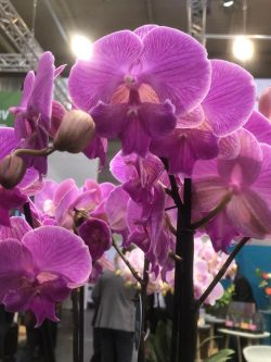 IPM ESSEN 2020 - THE MEETING PLACE OF THE INTERNATIONAL HORTICULTURAL SECTOR
