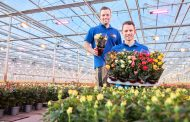 Signify's Philips GreenPower LED toplighting compact product range extension simplifies switch to LED grow lights in greenhouses