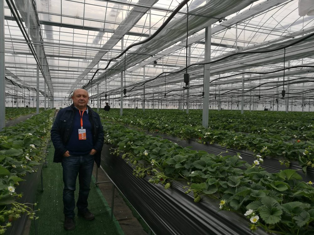 International Strawberry Symposium 2020: the programme for the IX edition is published