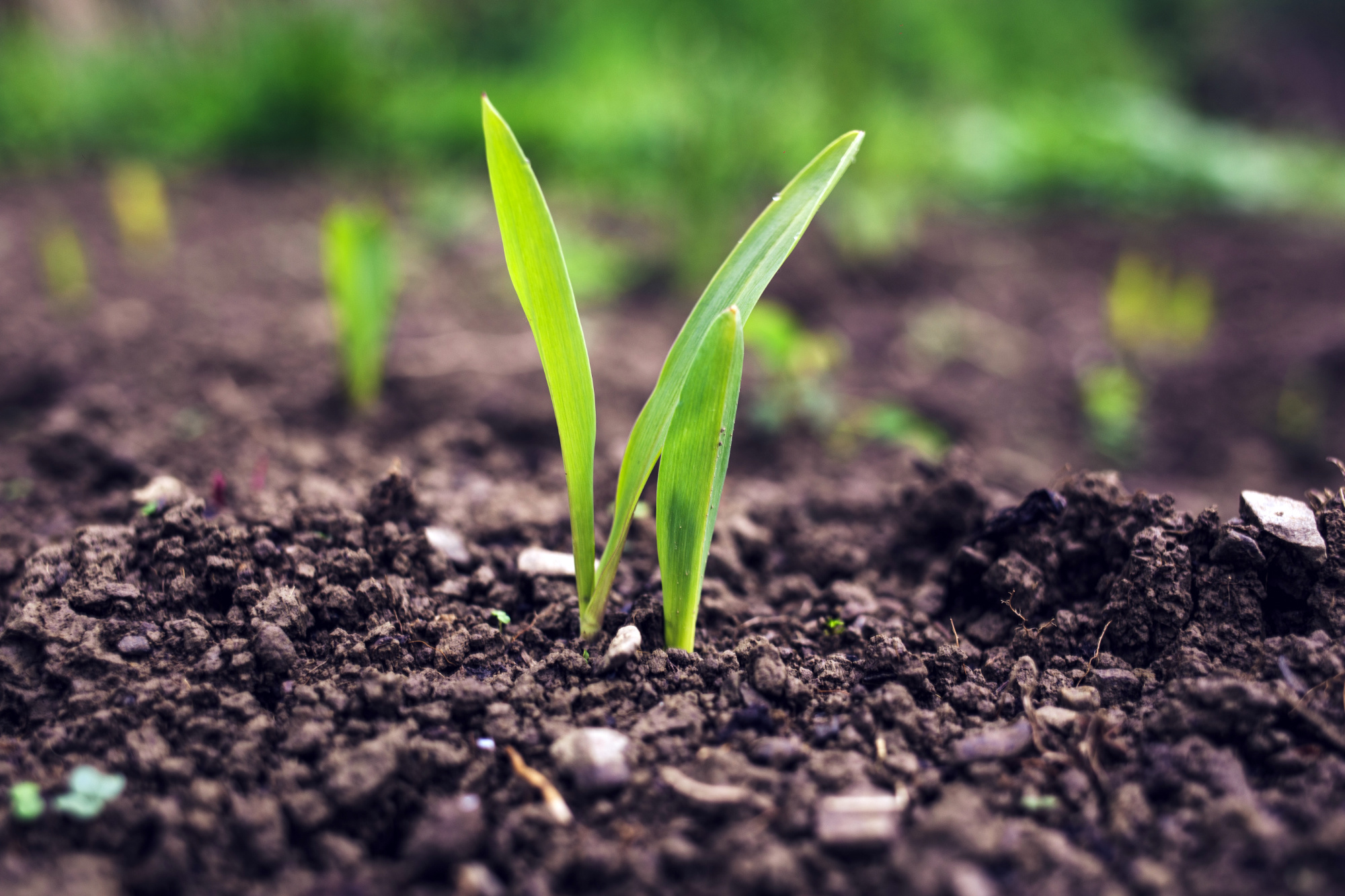 HOW HUMIC ACIDS HELP TO RAISE THE HUMUS CONTENT ON ARABLE LAND