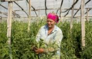 Mainstreaming Sustainable Food and Agriculture in the Republic of Moldova