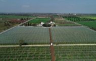 PEACHES AND APRICOTS, PROTECTION FROM HAIL AND INSECTS WITH ARRIGONI SCREENS