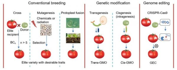 CRISPR Technology Could Democratise Agriculture
