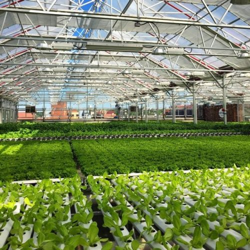 8 Beneficial Greenhouse Growing Tips You Need to Know