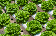 Is Indoor Farming Critical to the Local Food Economy?