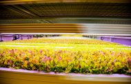 Kuwait's NOX Management Opens the First Large-Scale Indoor Vertical Farm in the Middle East