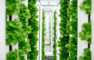 Bayer and Temasek unveil innovative new company focused on developing breakthroughs in vertical farming