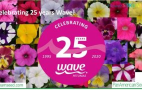 Wave Petunias celebrates 25 years of spreading colour