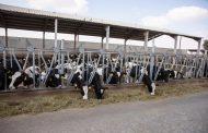 Al Ain Farms, first UAE farm to pledge commitment to animal welfare