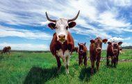 Foods of animal origin to the (international) challenge of sustainability