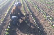 Research Addresses Structural Barriers to Building Soil Health