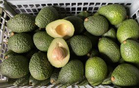 Durabilis confirms huge export potential for Ethiopian produce