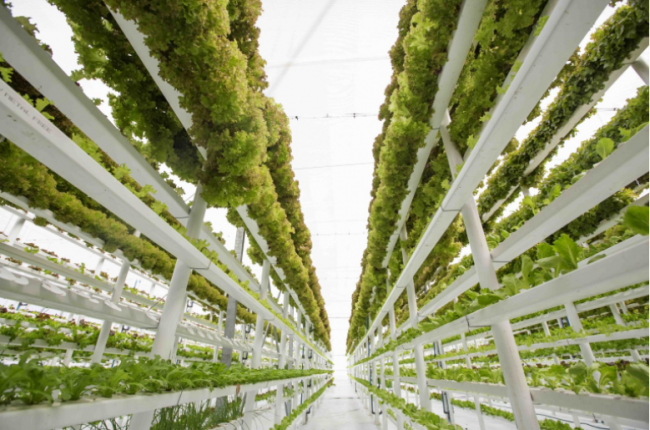 The Growth of hydroponics in the GCC
