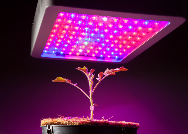 The 5 Best LED Grow Lights to Use for Indoor Plants and Greenhouse Growing