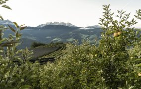 VOG PARTNERS WITH SUSTAINAPPLE, THE SOUTH TYROLEAN APPLE CONSORTIUM'S SUSTAINABILITY STRATEGY